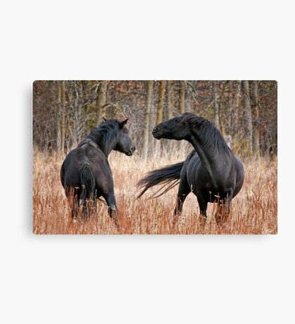 Looking for Trouble Canvas Print