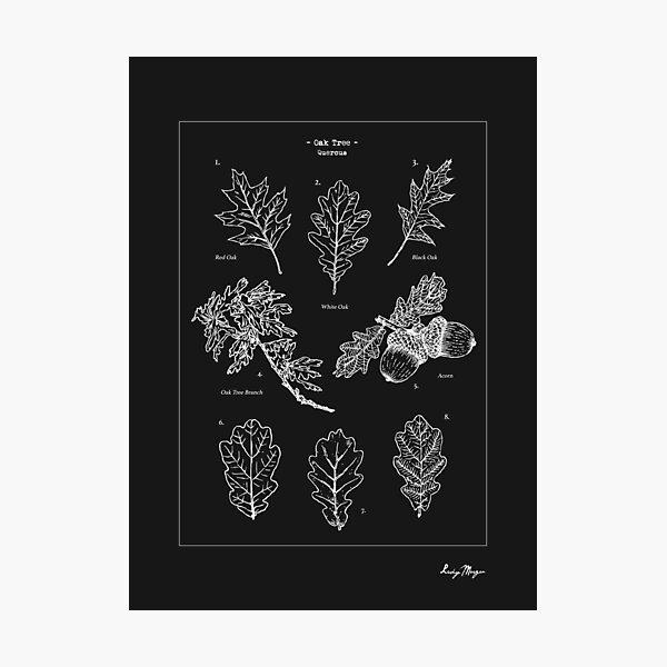 Oak Tree Elements Photographic Print