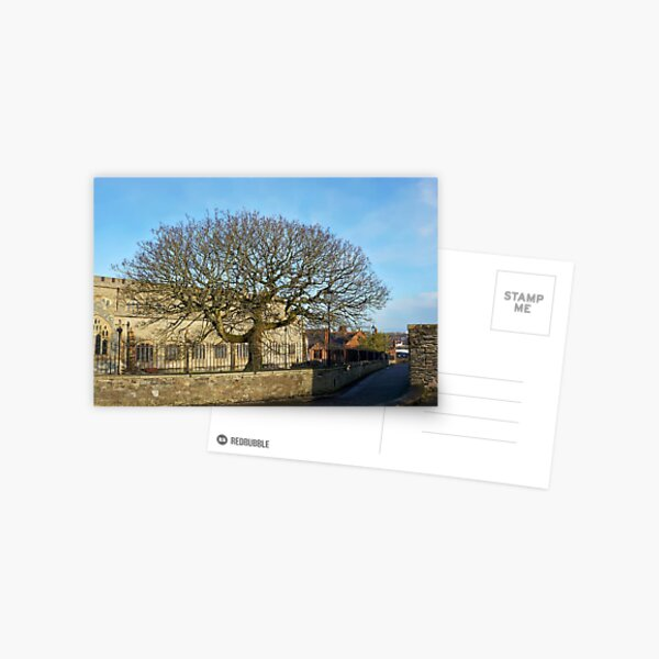 Walls of Derry - tree Postcard