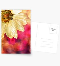 Daisy - Golden on Pink Postcards