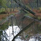 Reflections in the Creek by Chelei