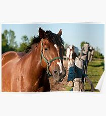 Horse By Cedar Fence Poster