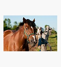 Horse By Cedar Fence Photographic Print