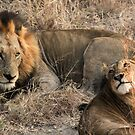 What a handsome couple!(I love you!) by Anthony Goldman