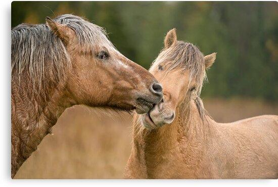 Horses by Michael Cummings