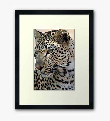 Maxabene 3:3 Young Male Leopard Framed Print