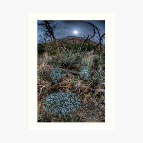 The Woods near Cabazon, CA Art Print