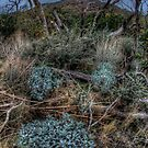 The Woods near Cabazon, CA by toby snelgrove  IPA