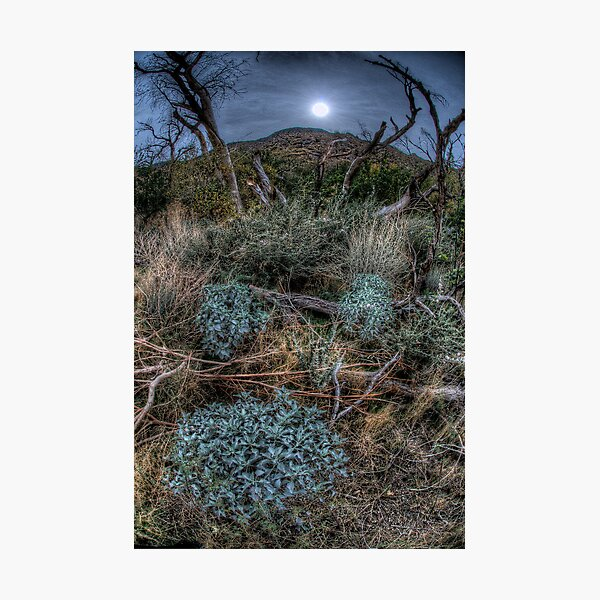 The Woods near Cabazon, CA Photographic Print