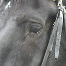 Meet Jackster by pallyduck