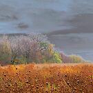 Autumn Fields by Brian Gaynor