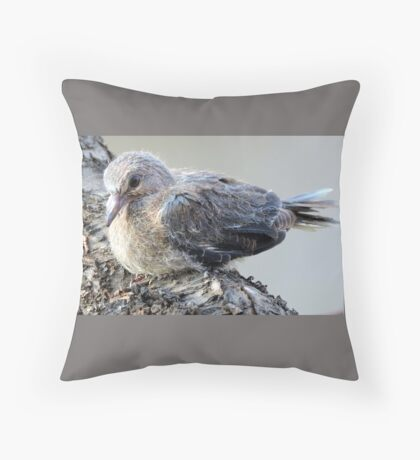 I'm only a fledgling!  Throw Pillow