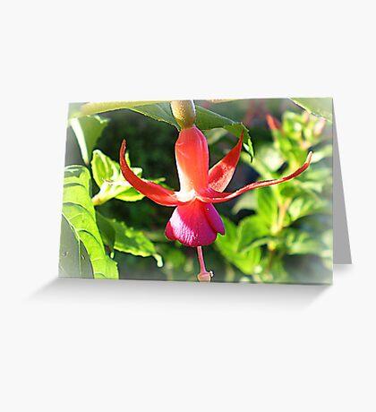 Fuchsia - Miniature - Oct. 2010 Greeting Card
