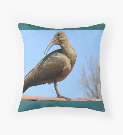 Hadeda Ibis Throw Pillow