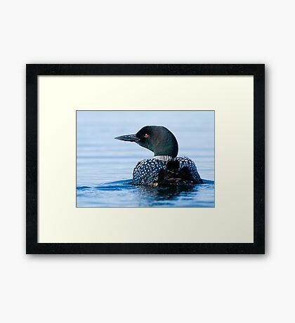 Common Loon - Mississippi Lake, Ontario Framed Print