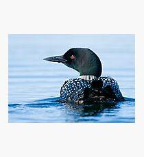 Common Loon - Mississippi Lake, Ontario Photographic Print