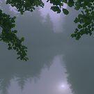 Fog on a pond by finnarct
