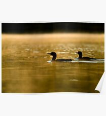 Misty Morning On The Lake Poster