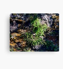 Moss Wall Canvas Print