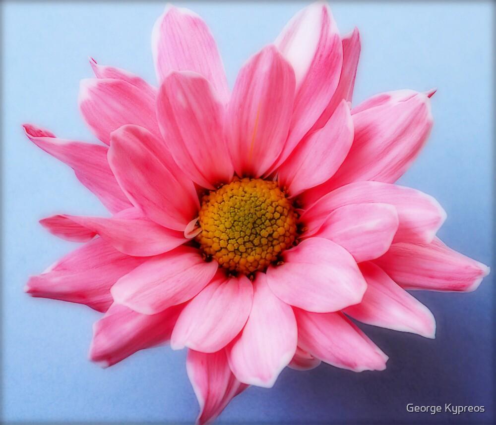 Untitled cute pink flower von George Kypreos