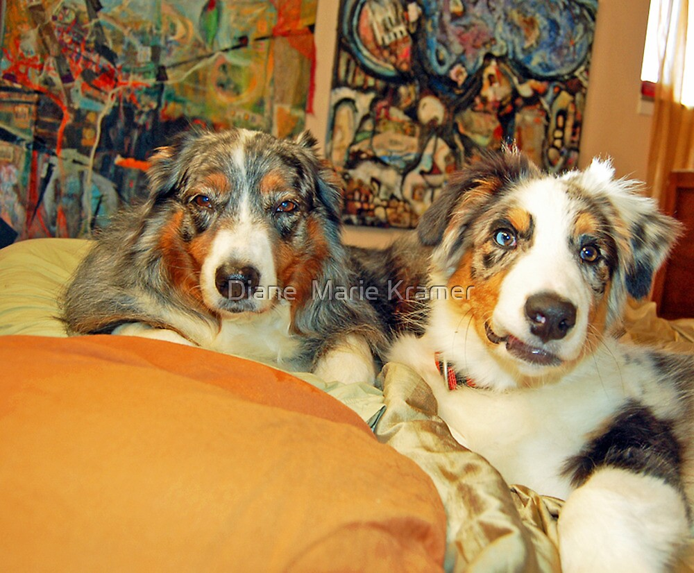 Dogs living the good life! by Diane  Marie Kramer