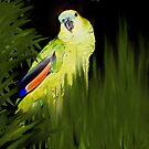 MY JAZZ... The Singer!!..got to watch the parrot singing by SherriOfPalmSprings Sherri Nicholas-