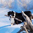 Snow boy Odin by Diane  Marie Kramer