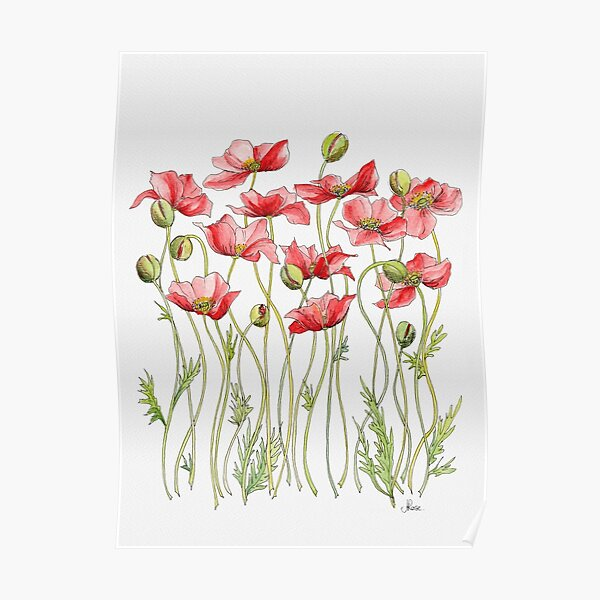 Red Poppies, Illustration Poster