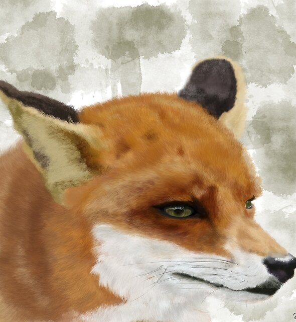 The Red Fox by VisualCondyle