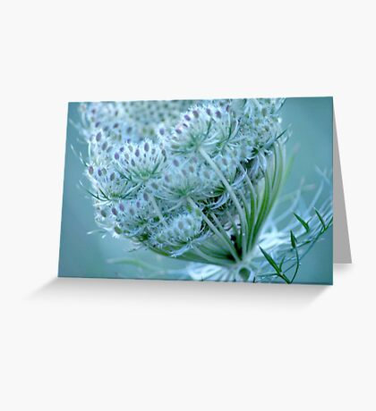 Queen Anne's Lace #3 Greeting Card