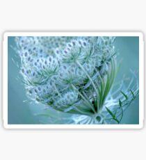 Queen Anne's Lace #3 Sticker