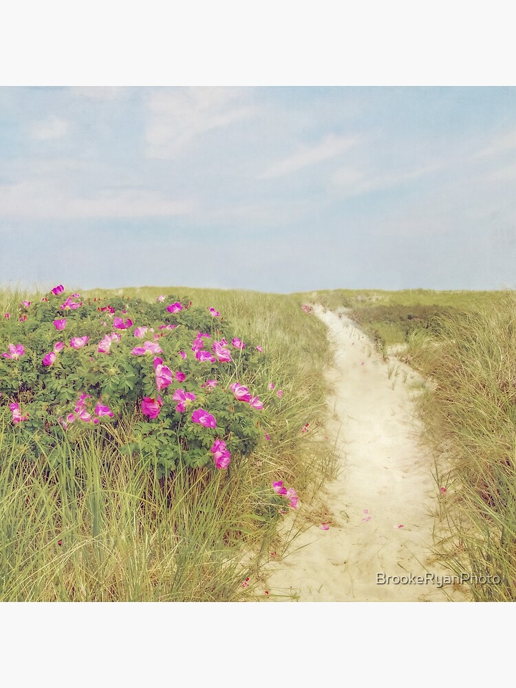 Beach Roses and Sandy Trail  by BrookeRyanPhoto