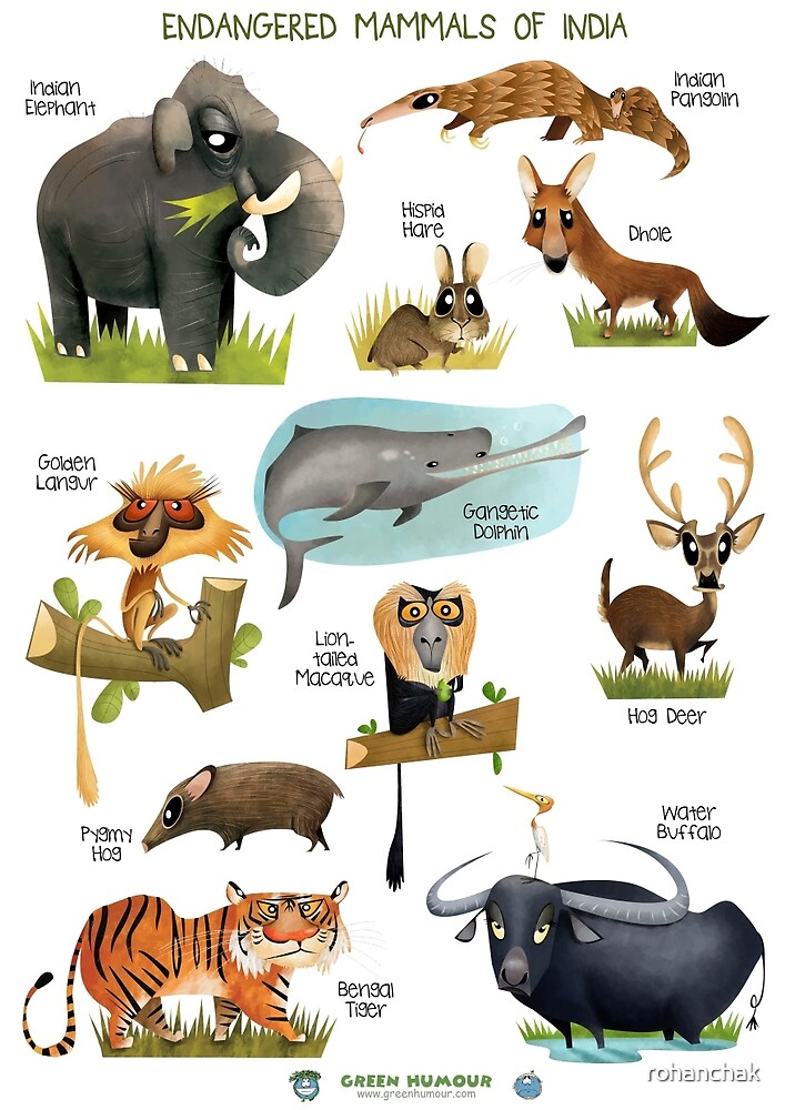 Quot Endangered Mammals Of India Quot By Rohanchak Redbubble