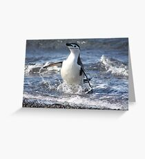Antarctica chinstrap penguin back from fishing Greeting Card
