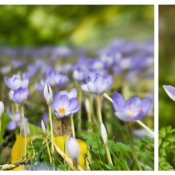 Woodland diptych by RedRose
