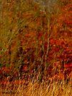 Red Fields by Marcia Rubin