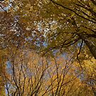 Autumn Colors by Milos Markovic