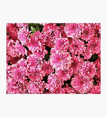 Mums Dark Pink Photographic Print