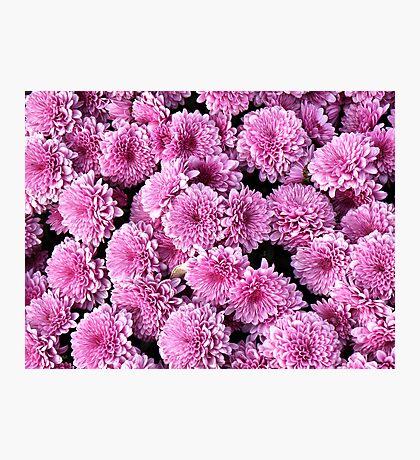 Mums Pink Photographic Print