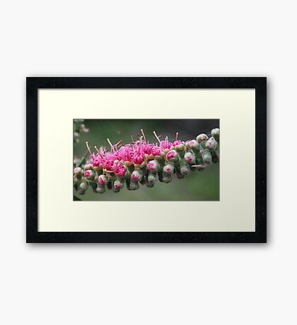 Pink Birth Framed Print