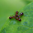 Ant Huddle by Phil Campus