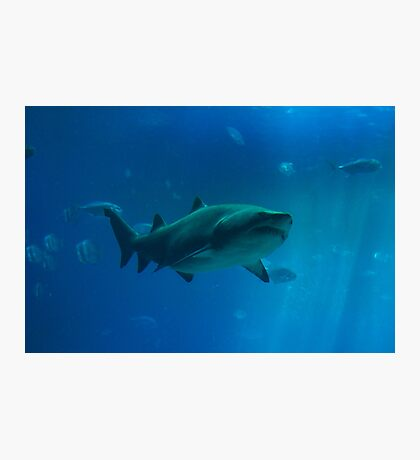 Shark Tank Photographic Print