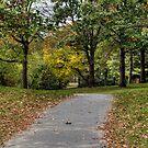 Autumn Walk in the Park by Monica M. Scanlan