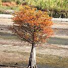 Lone Cypress Tree by DebbieCHayes