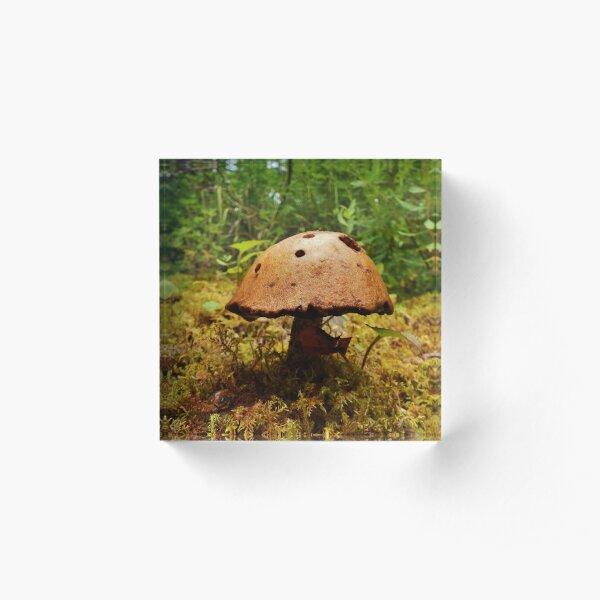 Alaska Mushroom - unidentified type Acrylic Block