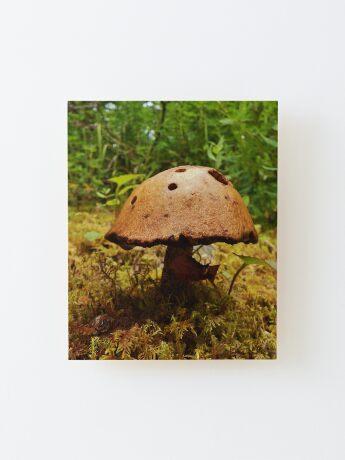 Alaska Mushroom - unidentified type Wood Mounted Print