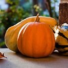 Fall Gourds by Alan Hyland
