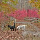 the boys in autumn by mikepaulhamus