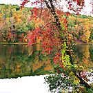 Color Palette at Lake Russell by Chelei