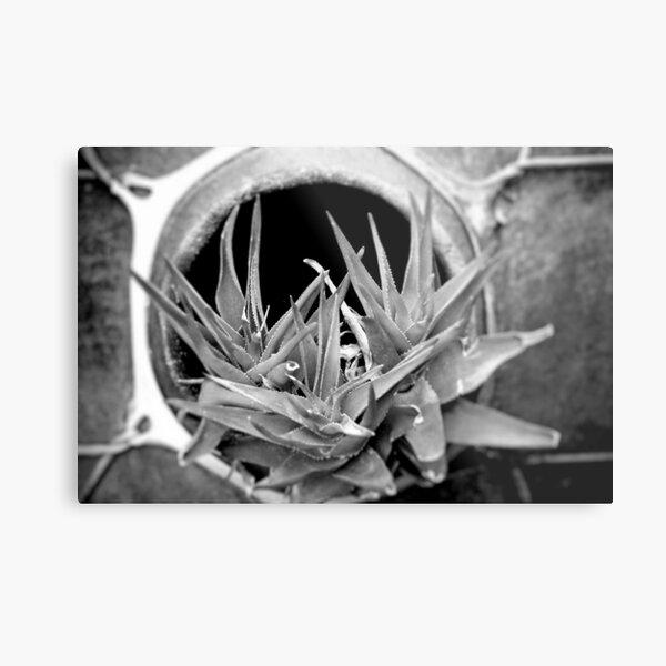 Cactus in Black & White Metal Print